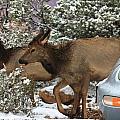Elk And A Beetle by Aaris K