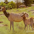 Elk And Calf by Sue Messerly