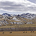 Elk At Sheep Mountain - 21x120 by J L Woody Wooden