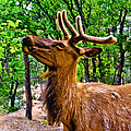 Elk Browsing In The Grand Canyon by Bob and Nadine Johnston