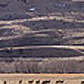 Elk Herd Below Sheep Mnt - 15x110 by J L Woody Wooden