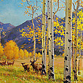 Elk Herd In Aspen Grove by Gary Kim