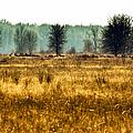 Elk In The Distance No. 1 by Belinda Greb