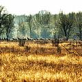 Elk In The Distance No. 2 by Belinda Greb