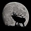 Elk Silhouette On Moon by Ernie Echols