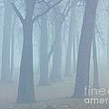 Elkhart Fog by Gary Richards