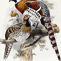 Elliot's Pheasant by Joseph Wolf