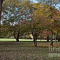 Ellison Park by William Norton