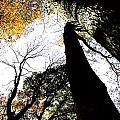 Elora Trees II by Lesa Fine