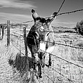 Elwood In Montana by Lauren Leigh Hunter Fine Art Photography
