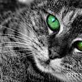 Emerald Eyes Cat  by Olga Hamilton