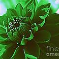 Emerald Green Beauty by Dora Sofia Caputo Photographic Design and Fine Art