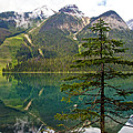 Emerald Lake Reflection And Pine Tree In Yoho National Park-british Columbia-canada by Ruth Hager