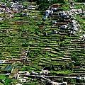 Emerald Madeira Terraces by Eric Tressler