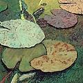 Emerald Pond by Allan P Friedlander
