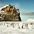 Emperor Penguin Colony Cape Washington Antarctica by Carole-Anne Fooks