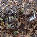 Empty Nest Always Welcome by Shelley Jones