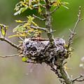 Empty Nest by Kerri Farley