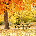 Empty Park On A Fall Day by Yoshiko Wootten