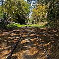 Empty Railroad Tracks by Denise Mazzocco