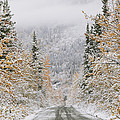 Empty Road Passing Through A Forest by Panoramic Images