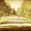 Empty Road by Skip Nall