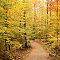 Empty Trail Runs Through Tall Trees by Paul Giamou