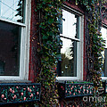 Empty Windows by Tara Lynn