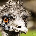 Emu by Safe Haven Photography Northwest