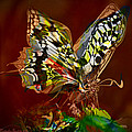 Enchanted Butterfly. First.  by Tautvydas Davainis