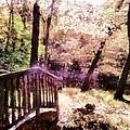 Enchanted Forest by Derek Gedney