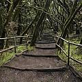 Enchanted Forest Garajonay National Park La Gomera Spain by Bruce Nutting