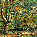 Enchanted Forest Tree by Gill Billington
