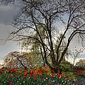 Enchanted Garden by Eti Reid