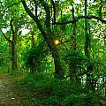 Enchanted Green Path by Vernis Maxwell
