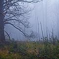Enchanted Mist - Casper Mountain - Casper Wyoming by Diane Mintle
