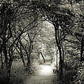 Enchanted Path Summer by Robert Gardner