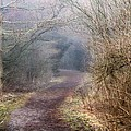 Enchanted Pathway by Davandra Cribbie