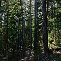 Enchanted Trail by Kelly Black