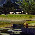 Enchanted Water Garden by Byron Varvarigos