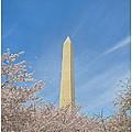 Enchanting Spring In Washington by Sonali Gangane
