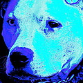 End Dog Fighting  by Q's House of Art ArtandFinePhotography