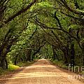 Endless Oaks by Adam Jewell