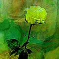 Enduring Yellow Rose by Shirley Sirois