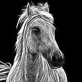 Energetic White Horse by Joachim G Pinkawa