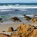 Energizing Seascape At Spanish Bay by Joyce Dickens