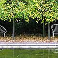 English Autumn by Ann Horn