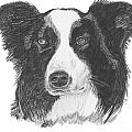 English Border Collie by Catherine Roberts