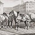 English Farm Horses, 1823 by French School