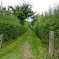 English Footpath by Denise Mazzocco